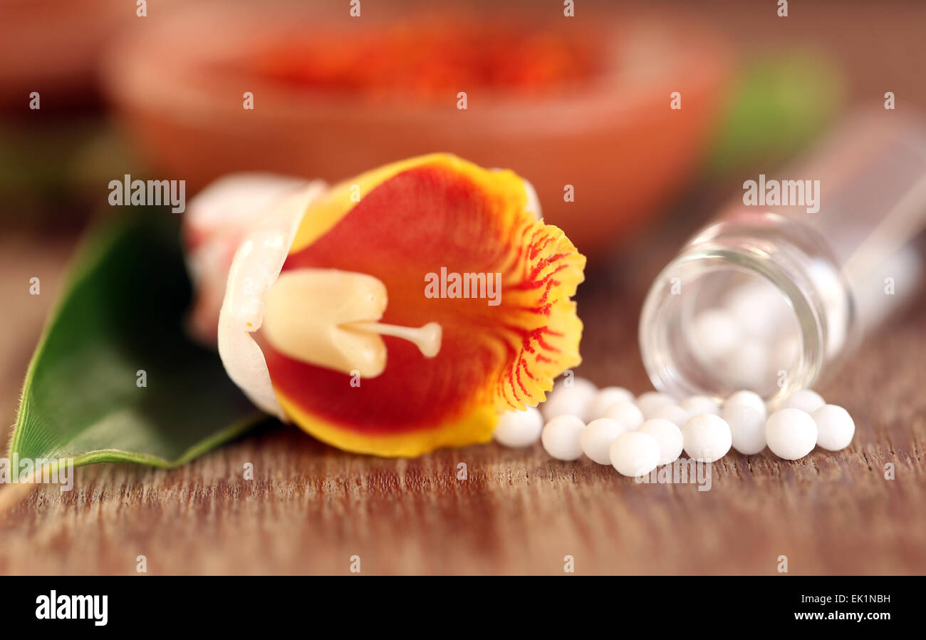 Homeopathy globules with herbal flower on wooden surface - Stock Image