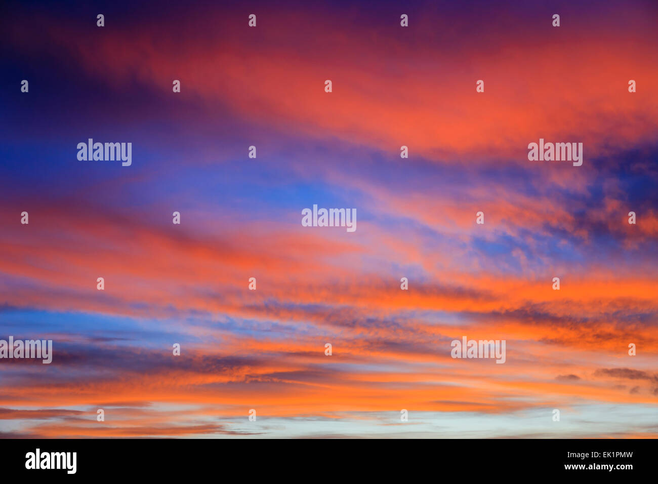 Firey September evening skyscape with clouds lit by the red sunset against a darkening blue sky. England, UK, Britain - Stock Image