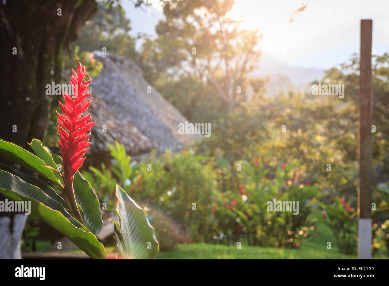 Sunrise on retiro lodge in lanquin town guatemala stock image