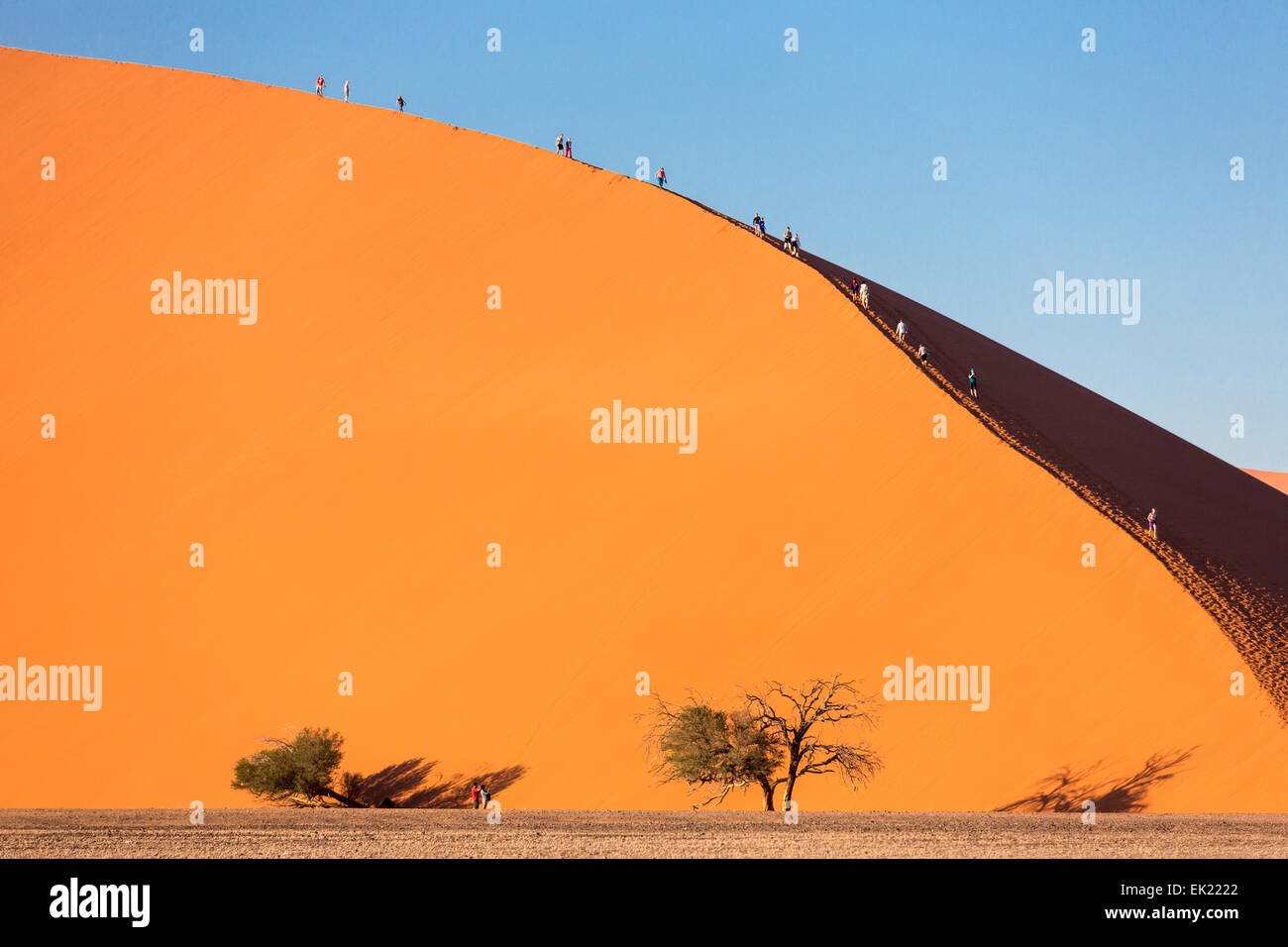 Early morning climbers on Dune 45 near Sossusvlei, Namib-Naukluft National Park, Namibia - Stock Image