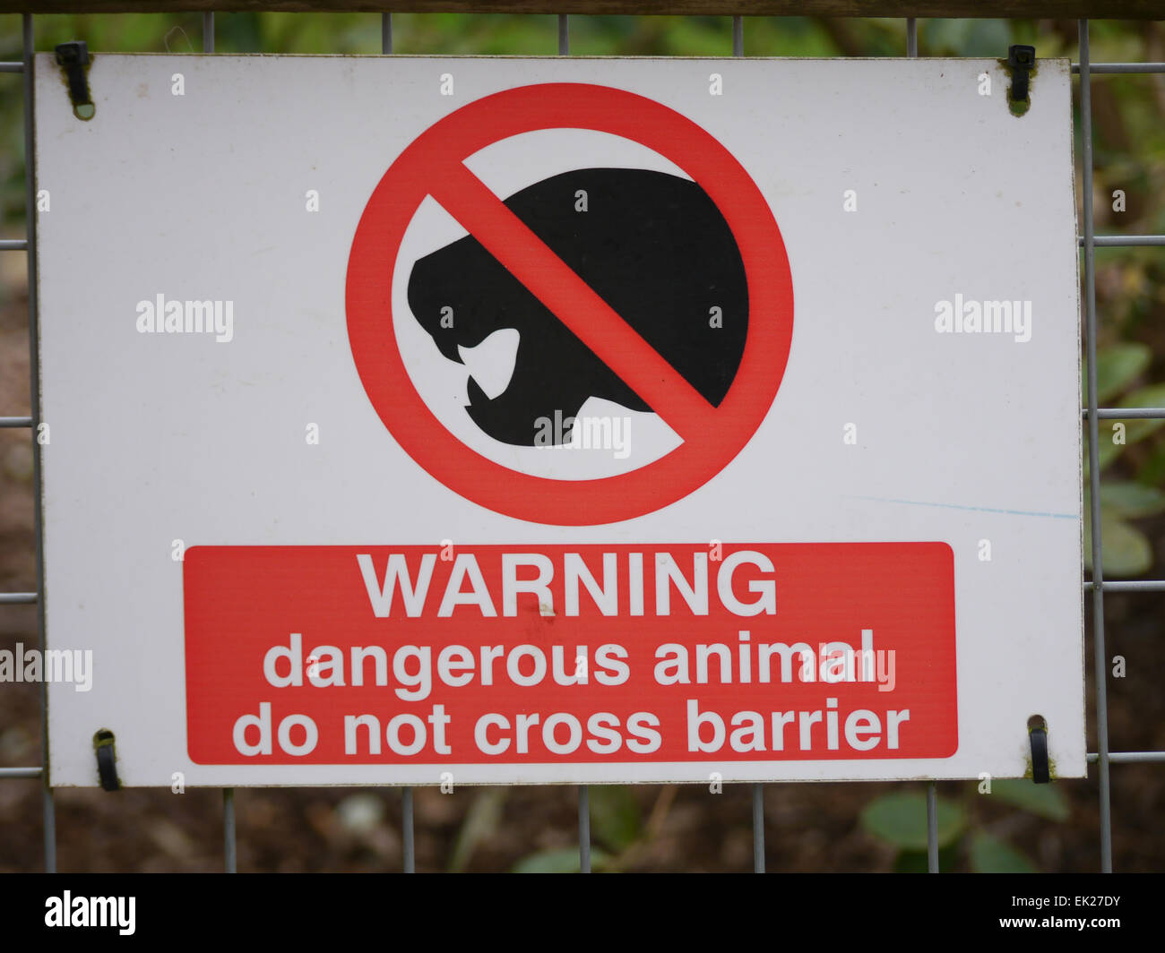 9d8f047b7 A sign at a zoo warning of dangerous animals Stock Photo: 80569719 ...