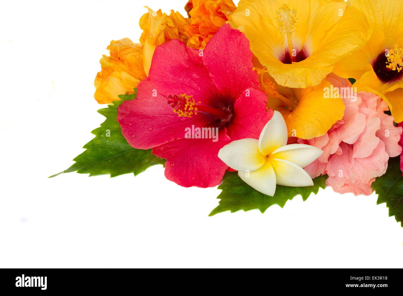 border of colorful hibiscus flowers Stock Photo: 80603860 - Alamy