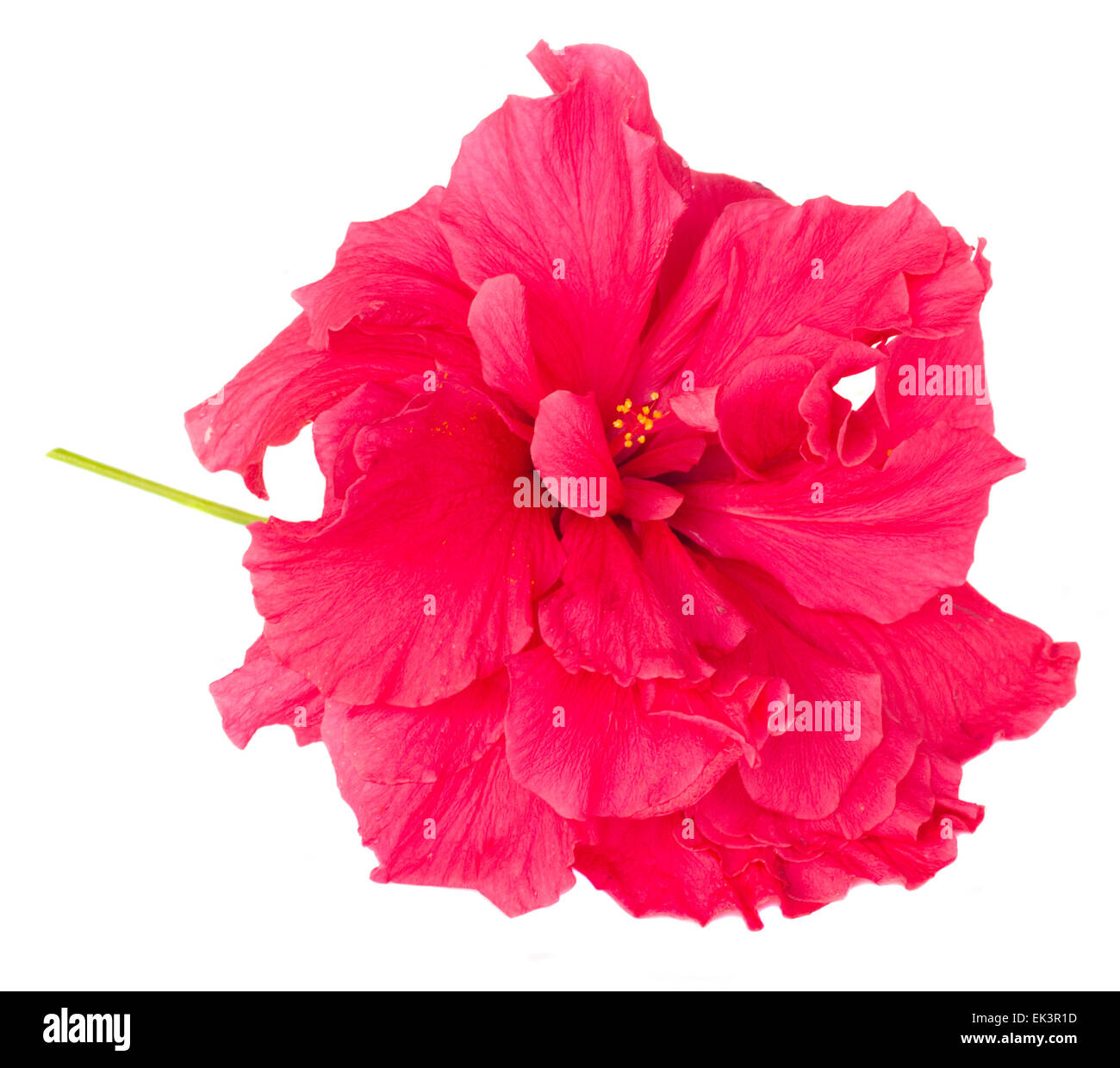 Border Of Colorful Hibiscus Flowers Stock Photo 80603865 Alamy