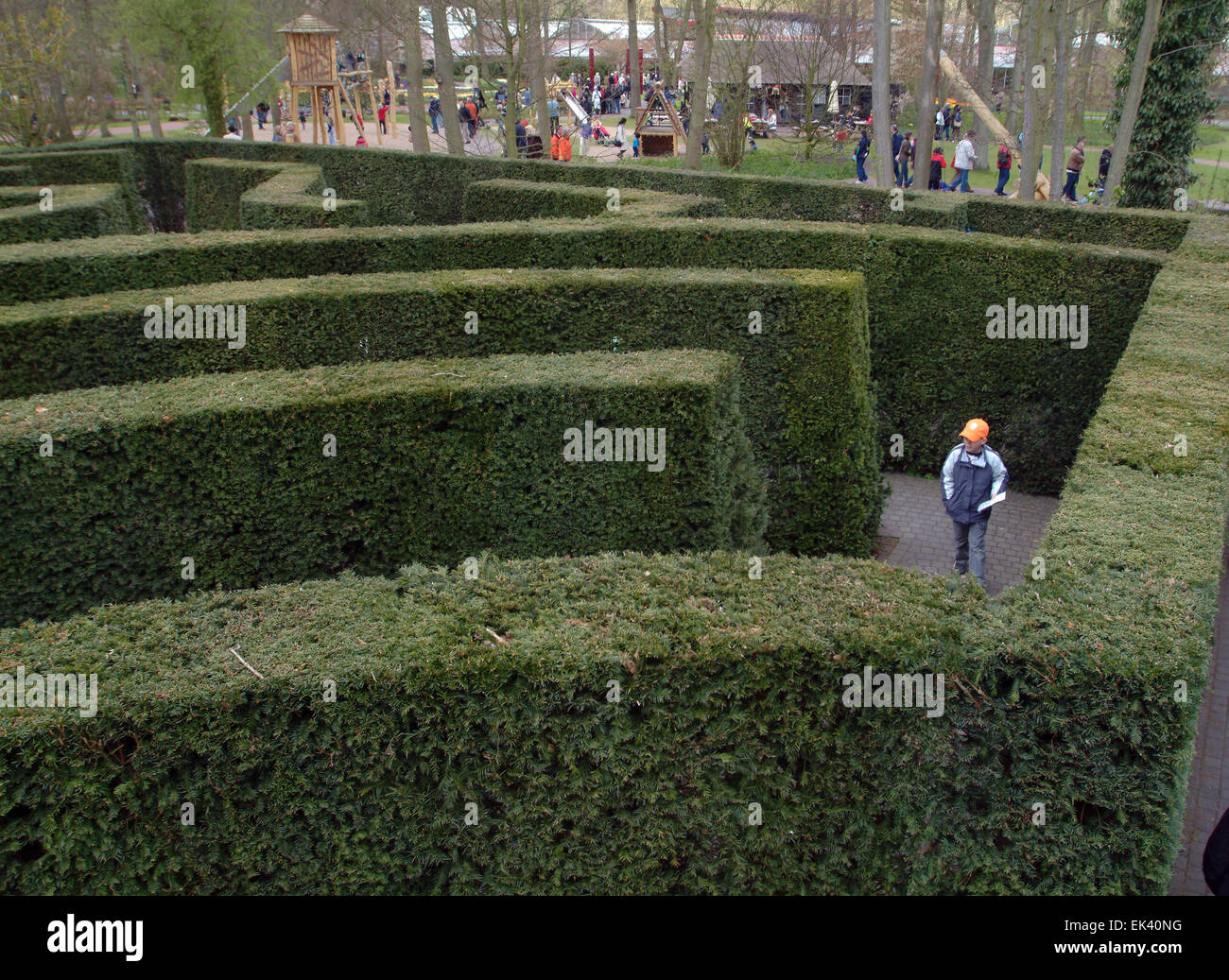 Green labyrinth made of conifers holland netherlands - Stock Image