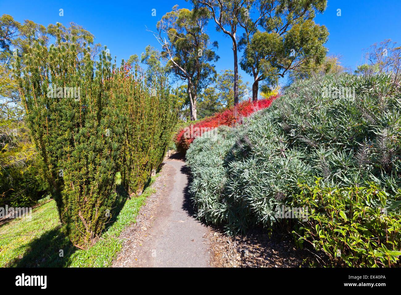 Mt Lofty Botanical Gardens Adelaide Hills South Australia Australian landscape landscapes autumn tourist attraction - Stock Image