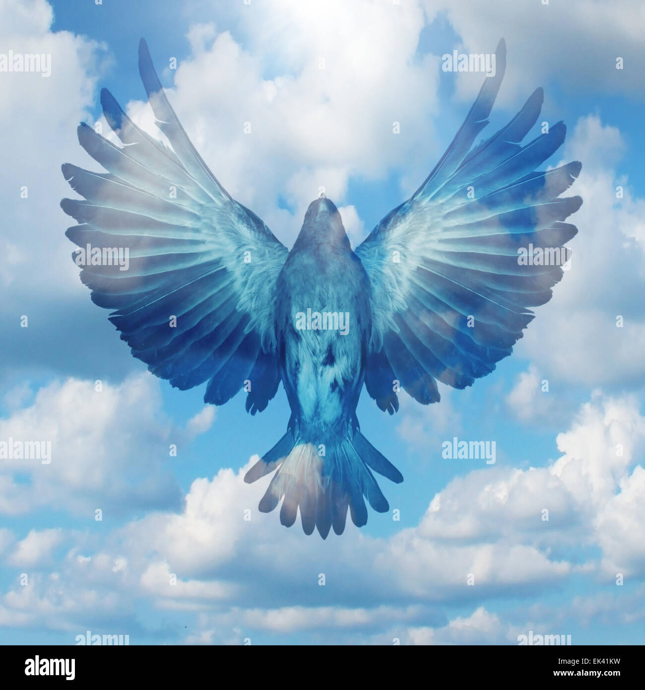 Spread your wings success concept as a flying bird with open extended feathers on a blue sky as a positive achievement - Stock Image
