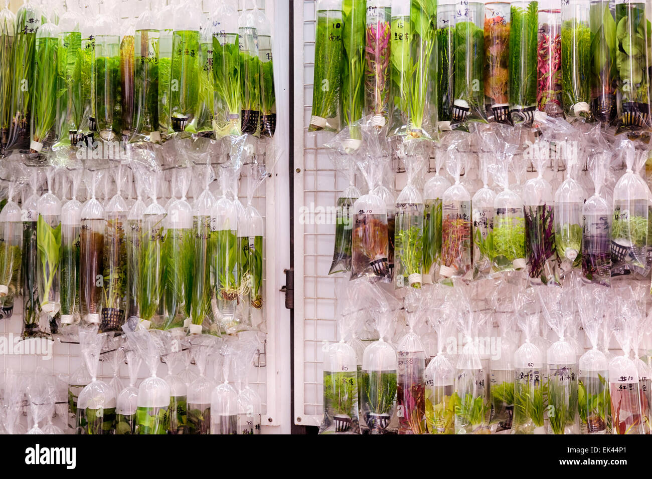 Aquarium plants displayed in plastic bags for sale in the Goldfish market in Mong Kok, Hong Kong. - Stock Image