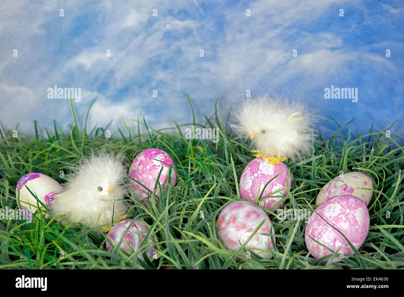 Dyed Baby Chicks Stock Photos & Dyed Baby Chicks Stock Images - Alamy