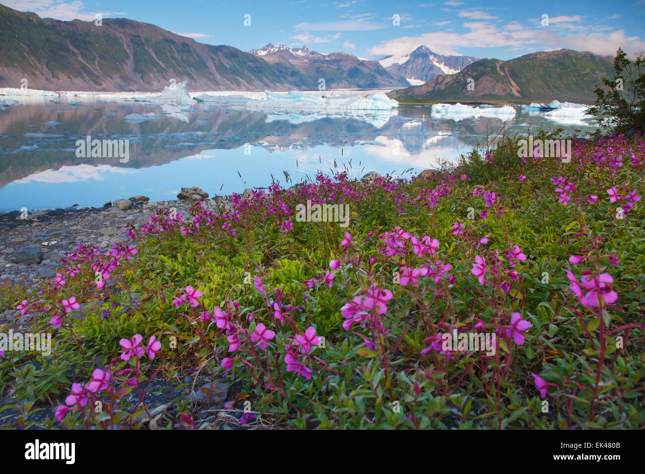 Bear Glacier Lagoon, Kenai Fjords National Park, near Seward, Alaska. - Stock Image