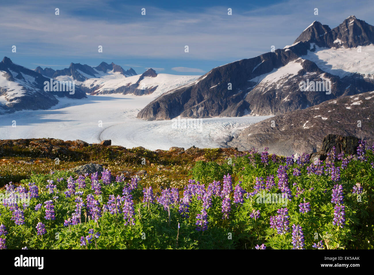 From Mount Stroller White above the Mendenhall Glacier, Tongass National Forest, Alaska. - Stock Image