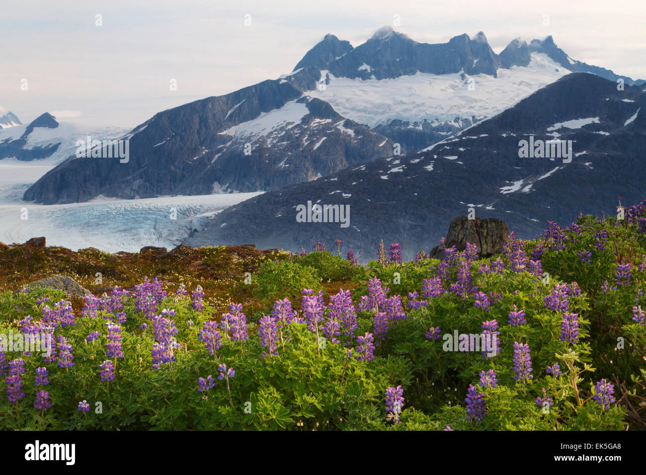 From Mount Stroller White above the Mendenhall Glacier, Tongass National Forest, Alaska - Stock Image