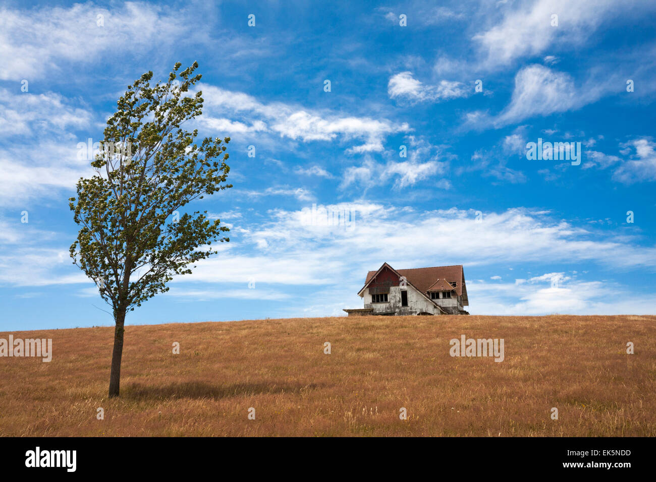 Tree And Remote Abandoned House On Top Of Hill In New Zealand Stock Photo Alamy