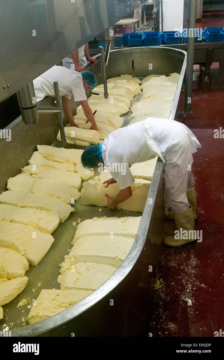 Workers making Wensleydale cheese in the Wensleydale Creamery, Hawes, North Yorkshire Dales, England UK - Stock Image