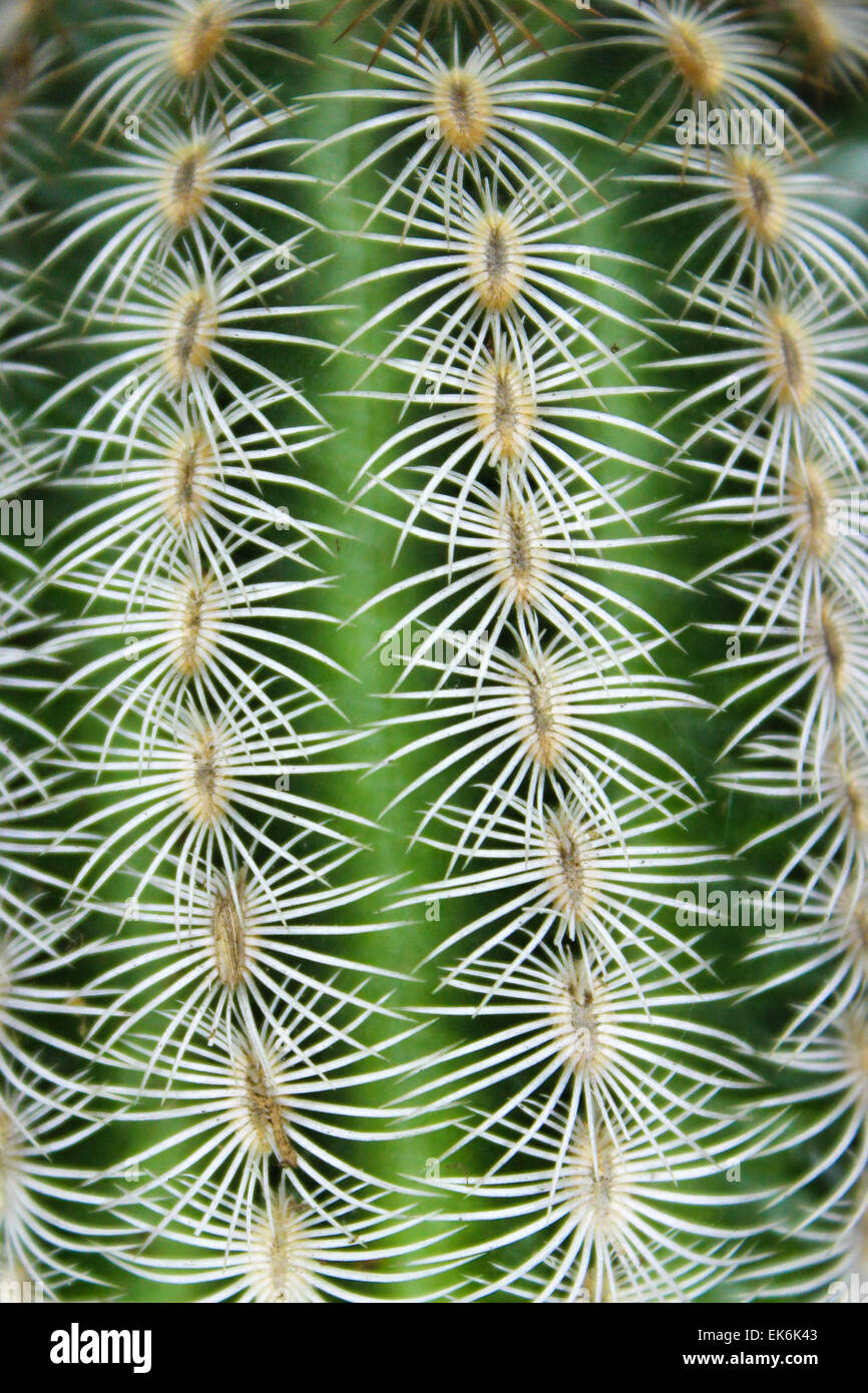 Rows of Spines - Stock Image