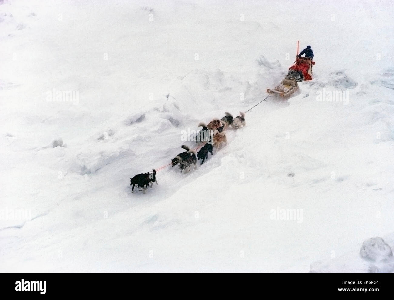 Dogsled team and mushers traveling in harsh winter arctic conditions - Stock Image