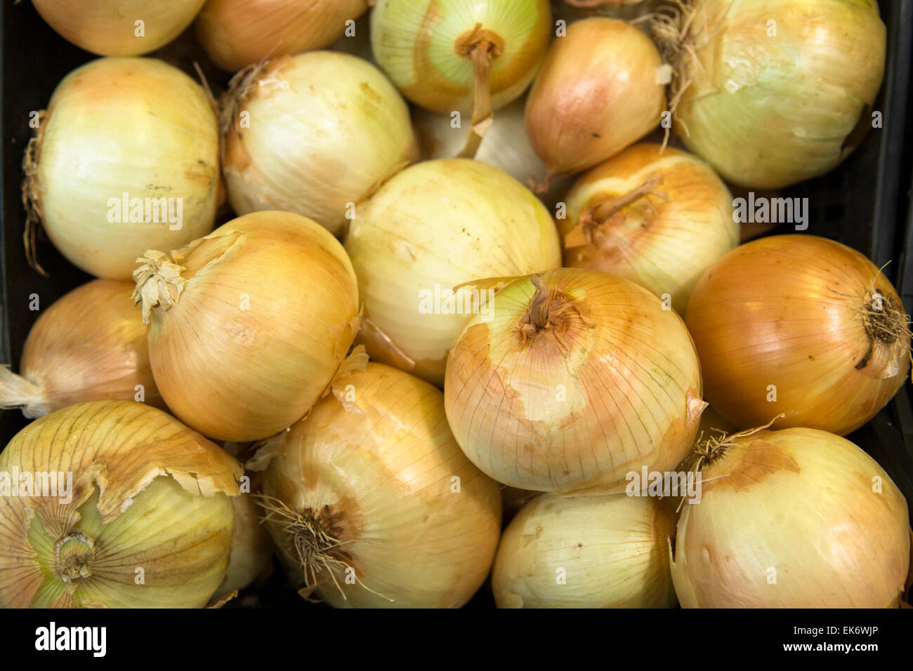 Onions in wholesale food market ready for selling - Stock Image