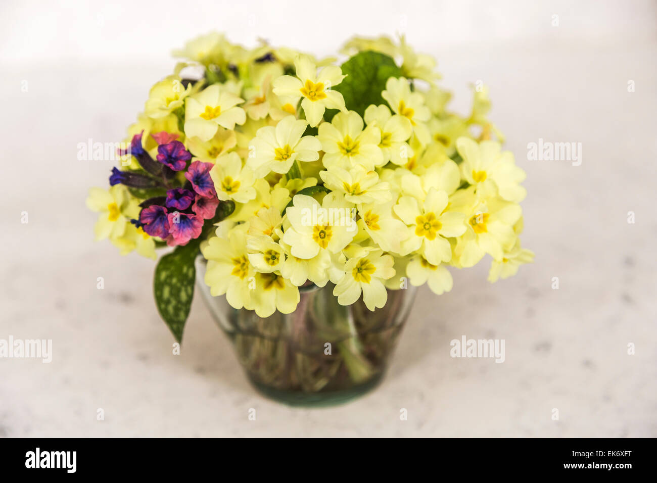 Flower arranging pretty posy of english spring flowers arranged in flower arranging pretty posy of english spring flowers arranged in a vase yellow primroses and purplepink lungwort mightylinksfo