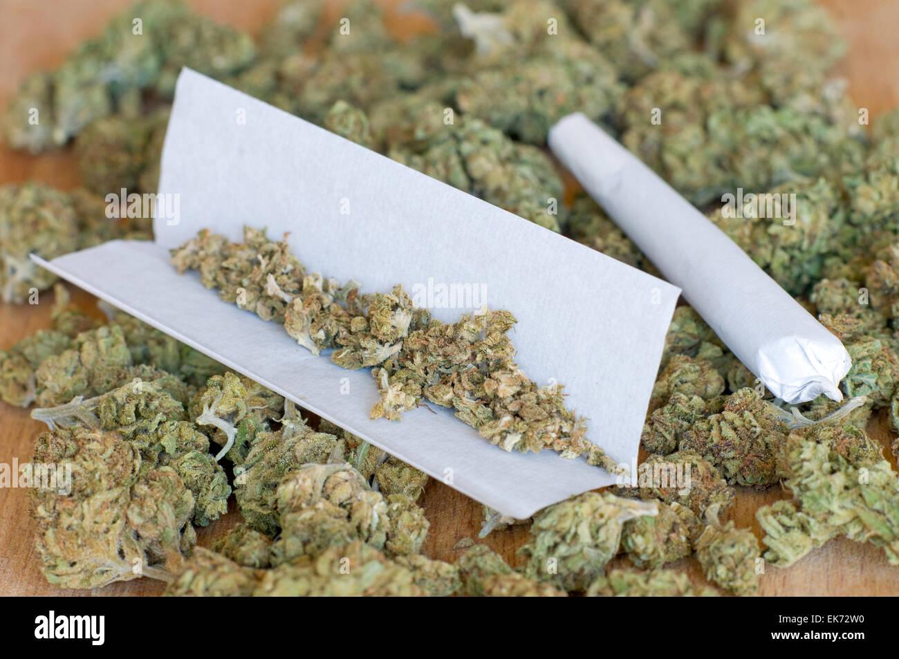 Dry marijuana buds with joint - Stock Image