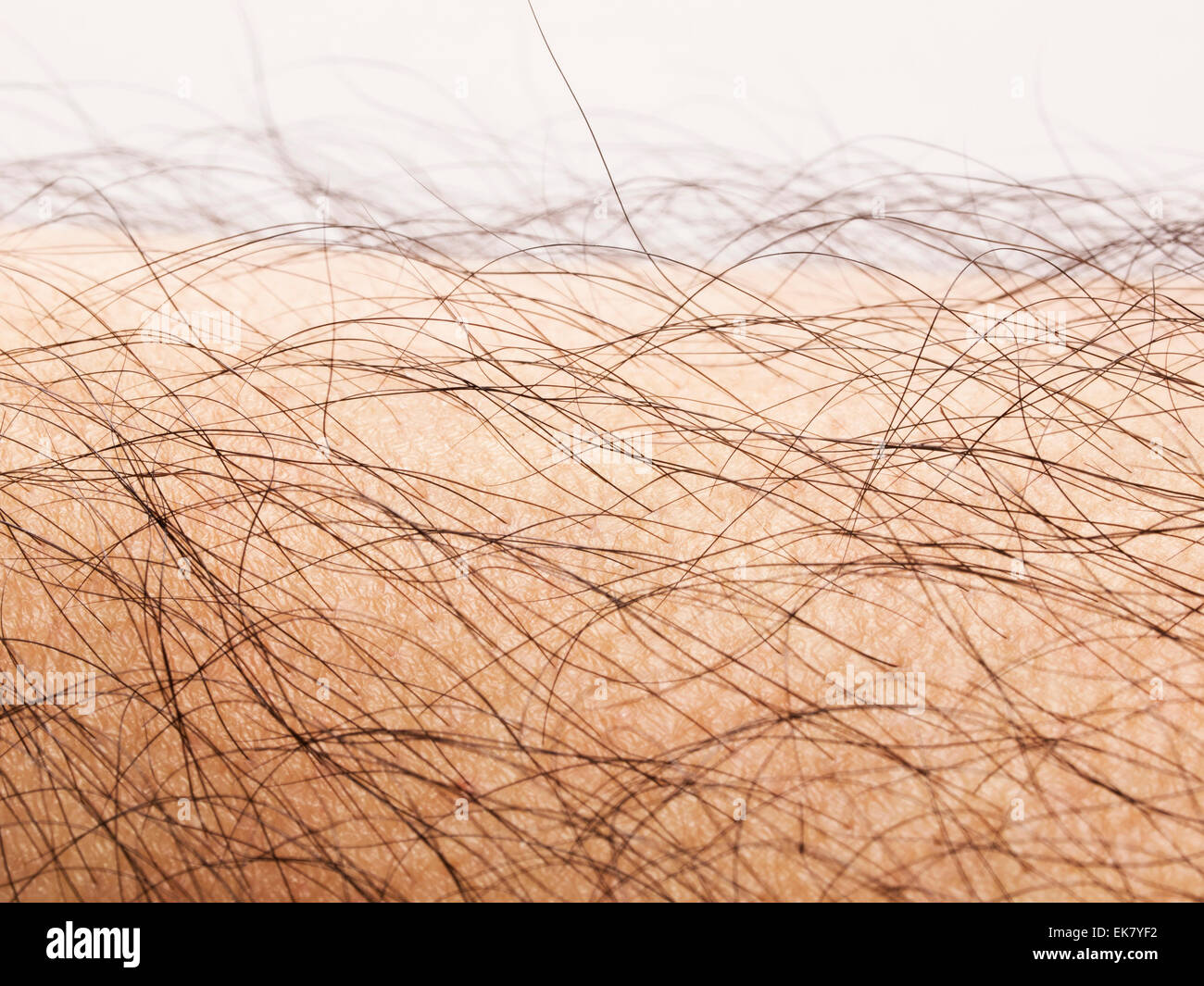 human body hair - Stock Image