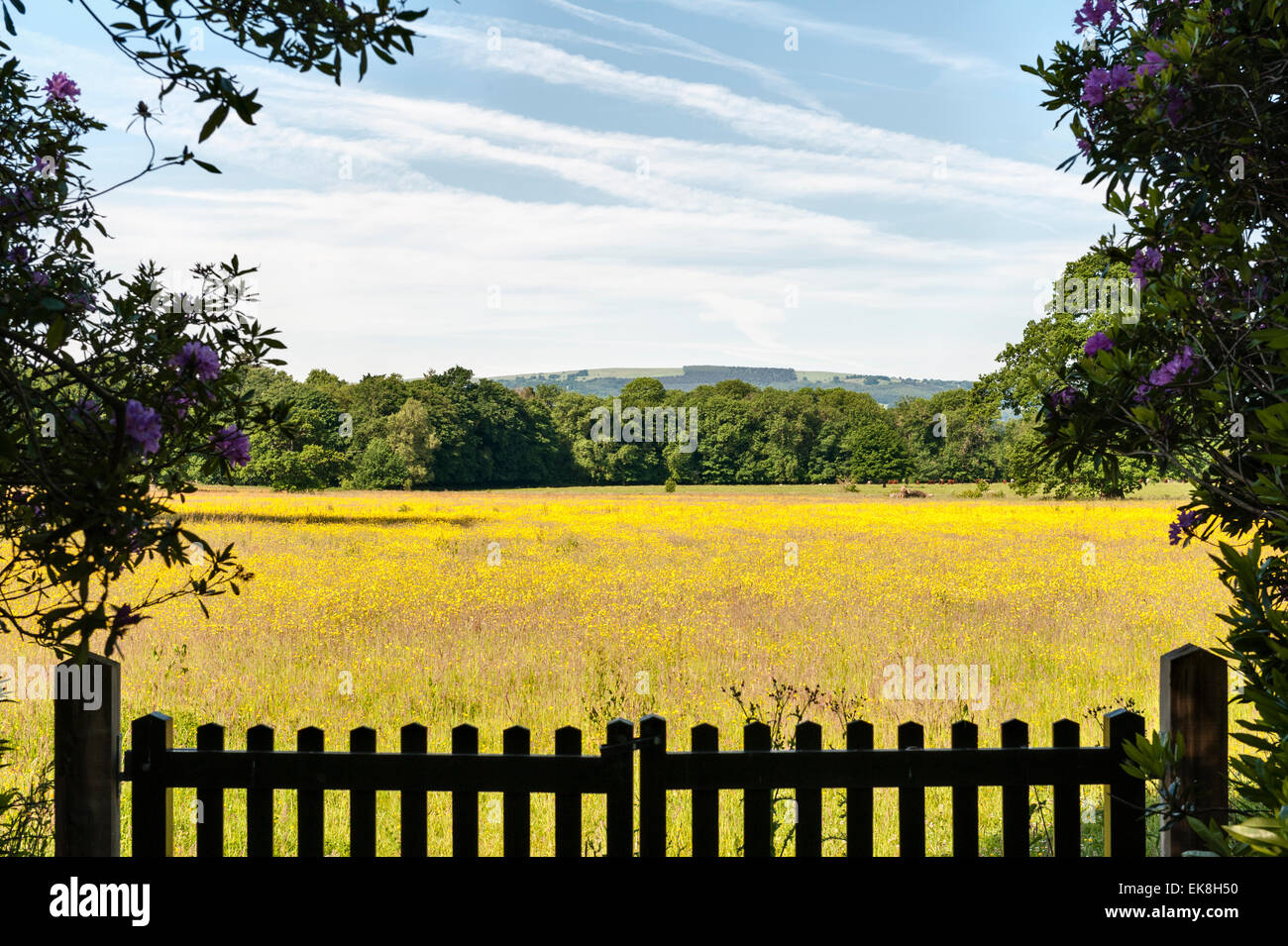 Near Raglan, Monmouthshire, Wales, UK. View near Clytha Castle into Clytha Park - a meadow of buttercups in summer - Stock Image