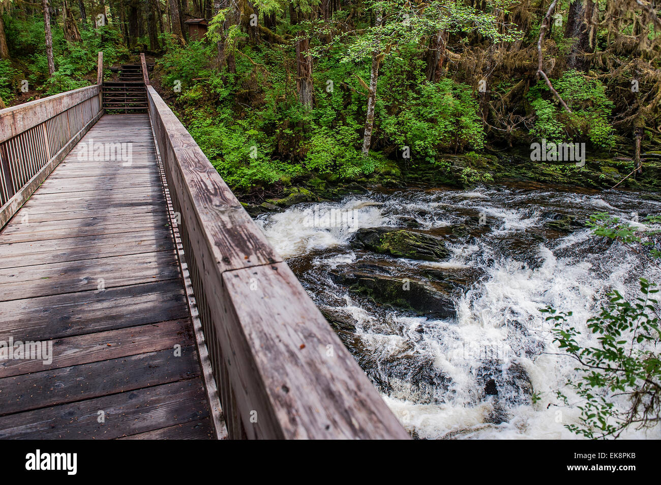 Wooden footbridge over a rushing stream in the temperate rainforest of Tongass National Forest, Ketchikan, Alaska, - Stock Image