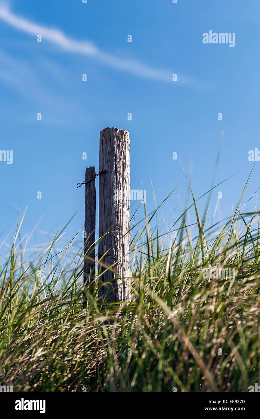 Dune fence post in dune grass, Cape Cod, Massachusetts, USA - Stock Image