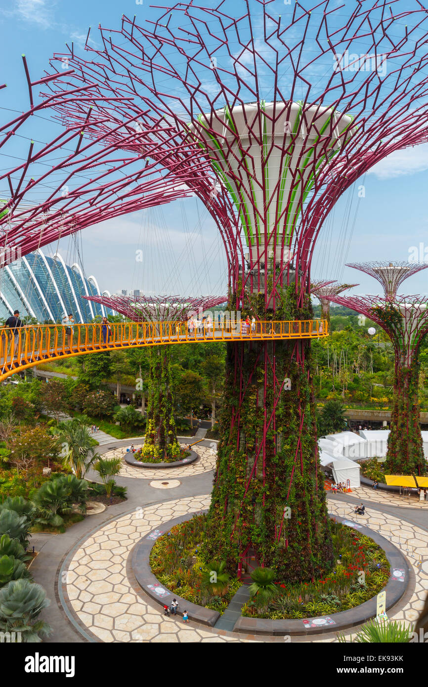 The Supertree Grove. Gardens by the Bay. Singapore, Asia Stock Photo ...