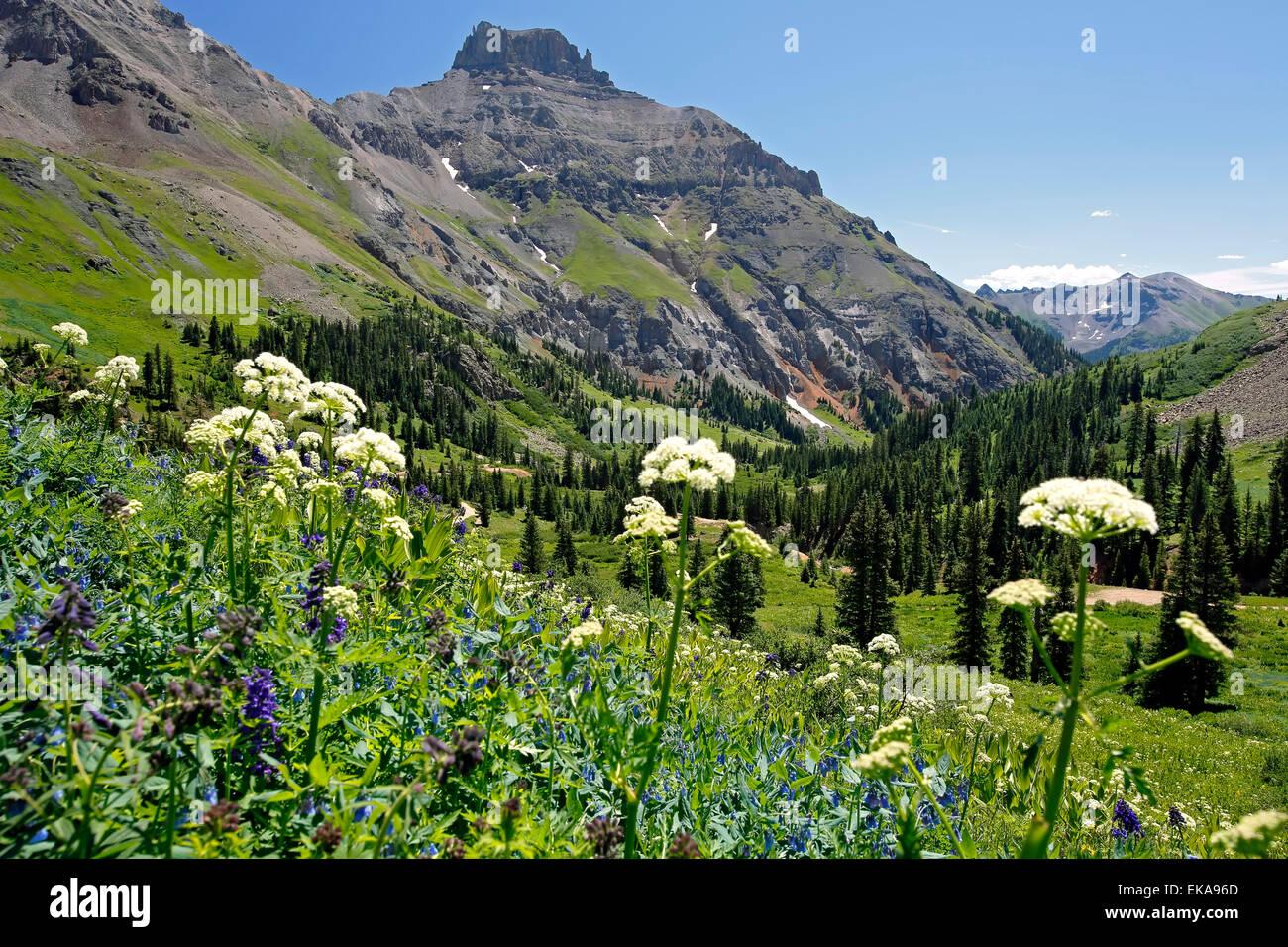 Teakettle Mountain and wildflowers, Yankee Boy Basin, near Ouray, Colorado USA - Stock Image
