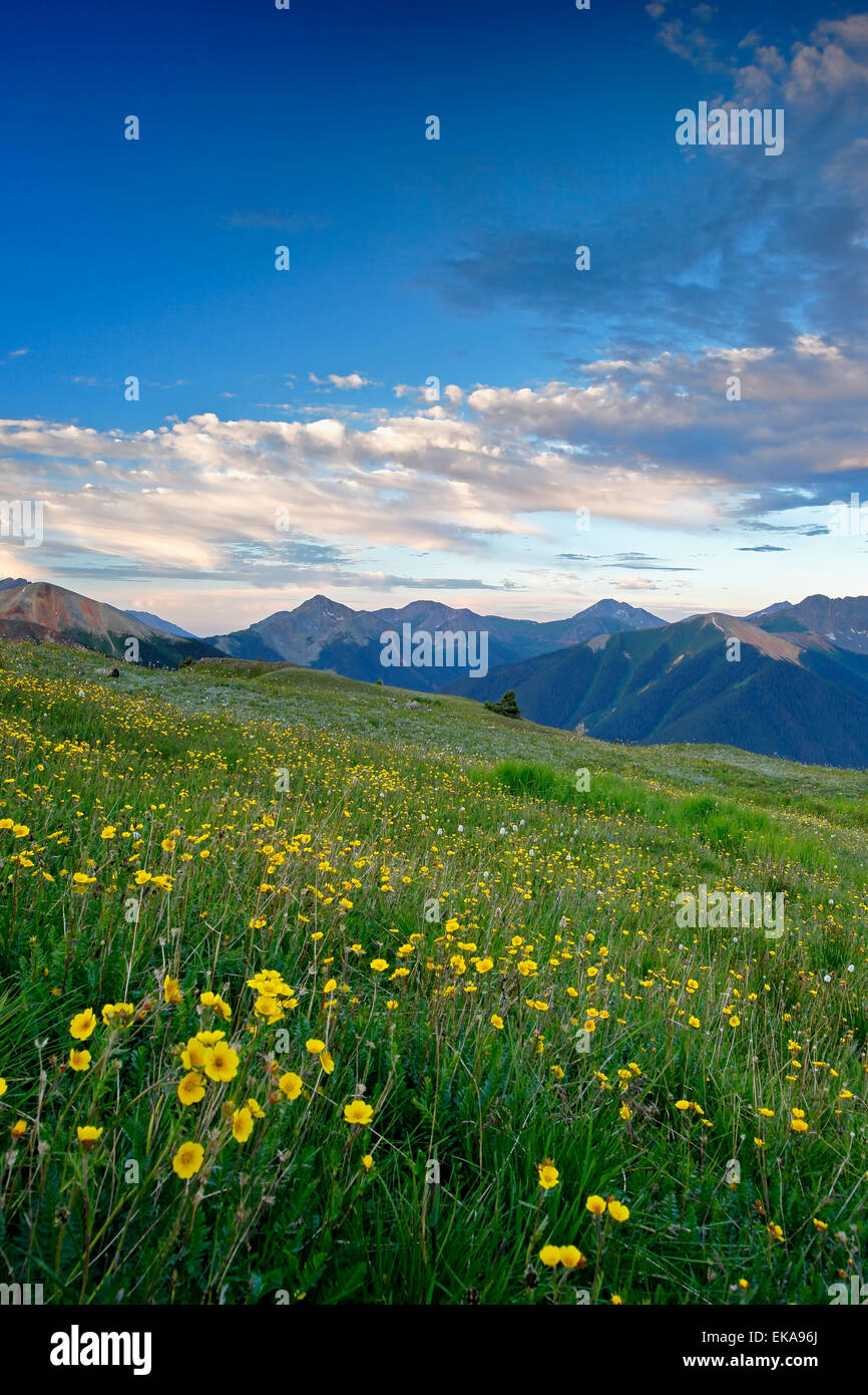 View of mountains and wildflowers from above U.S. Basin, San Juan Mountains, near Silverton, Colorado USA - Stock Image