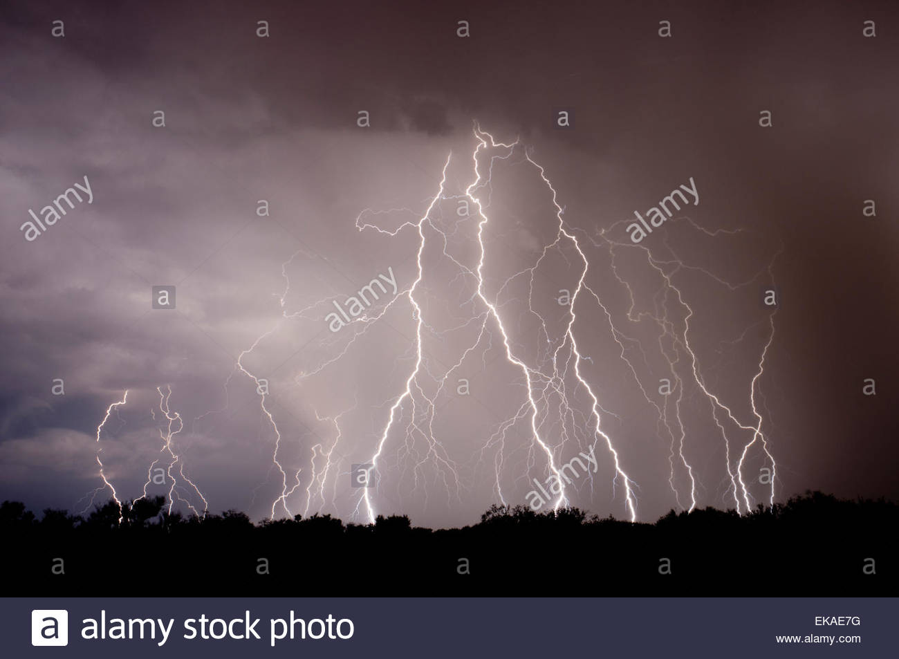Lightning strikes in the desert north of Tucson Arizona in a summer monsoon type thunderstorm.Rain falling in dessert. - Stock Image