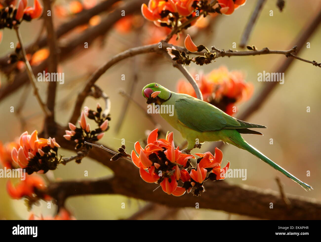 Spring Season In India Stock Photos Spring Season In India Stock