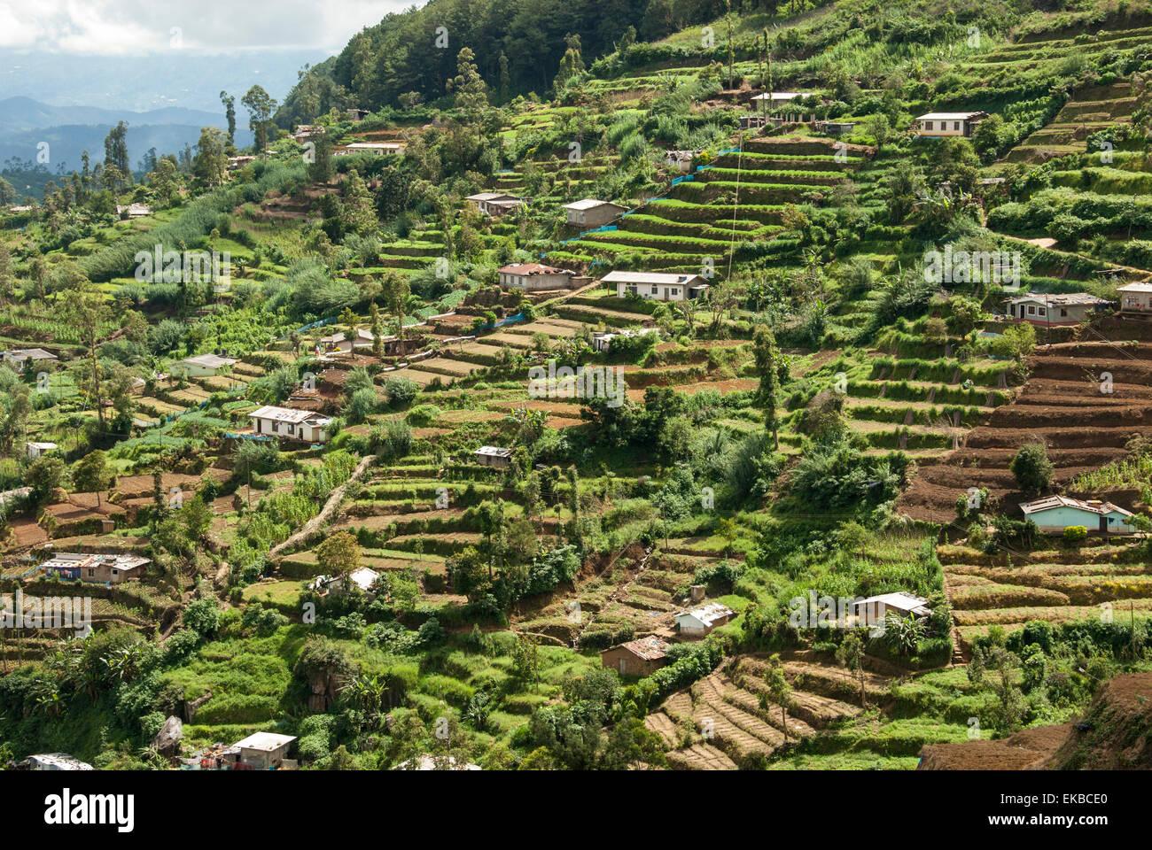 Terraced farmland above Ambewela, Hill Country, Sri Lanka, Asia - Stock Image