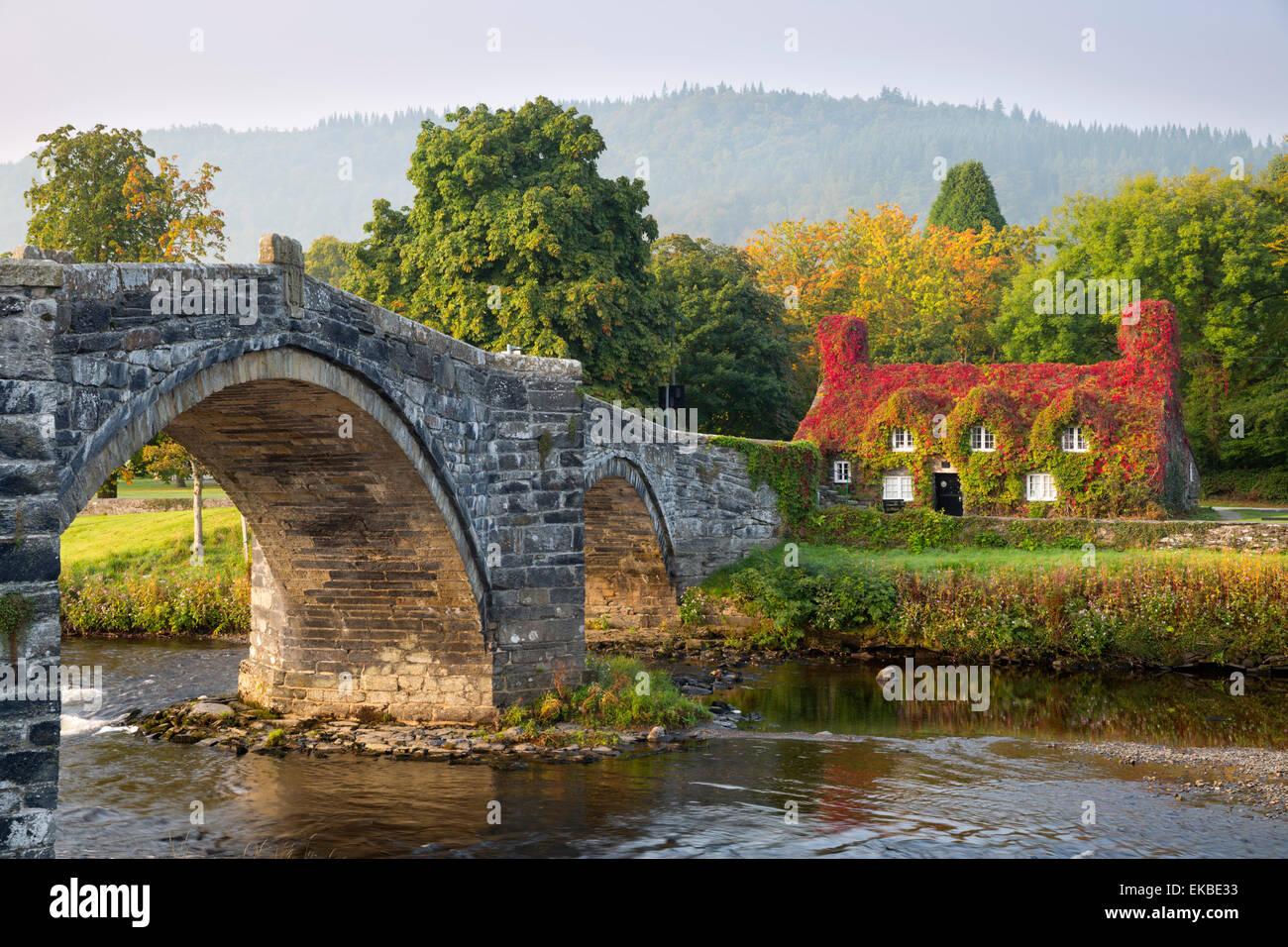 Tu Hwnt i'r Bont tearoom and Pont Fawr (Big Bridge) in autumn, Llanrwst, Snowdonia, Conwy, Wales, United Kingdom, - Stock Image