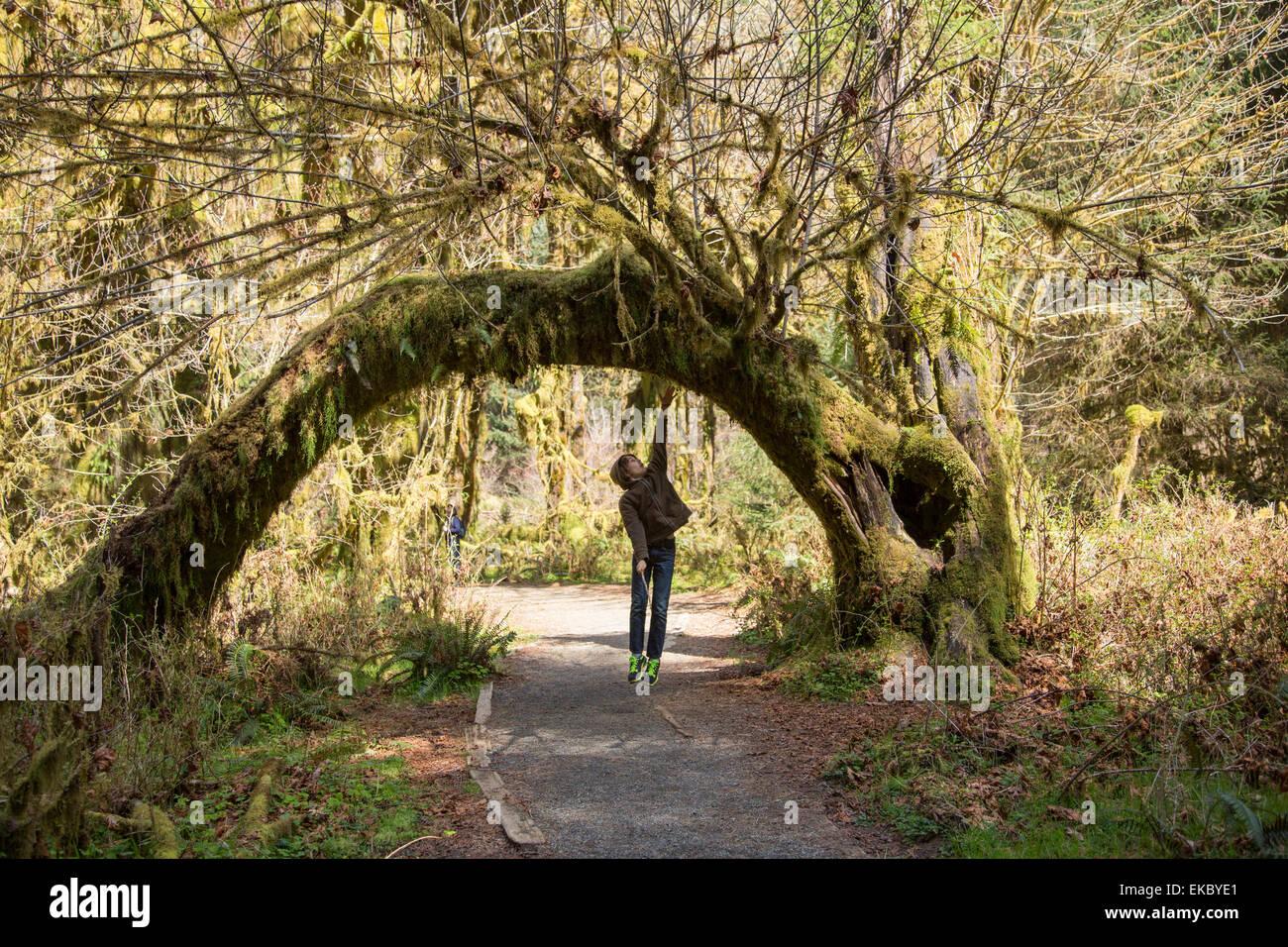 Olympic National Park, Hoh Rainforest, Washington State, USA - Stock Image