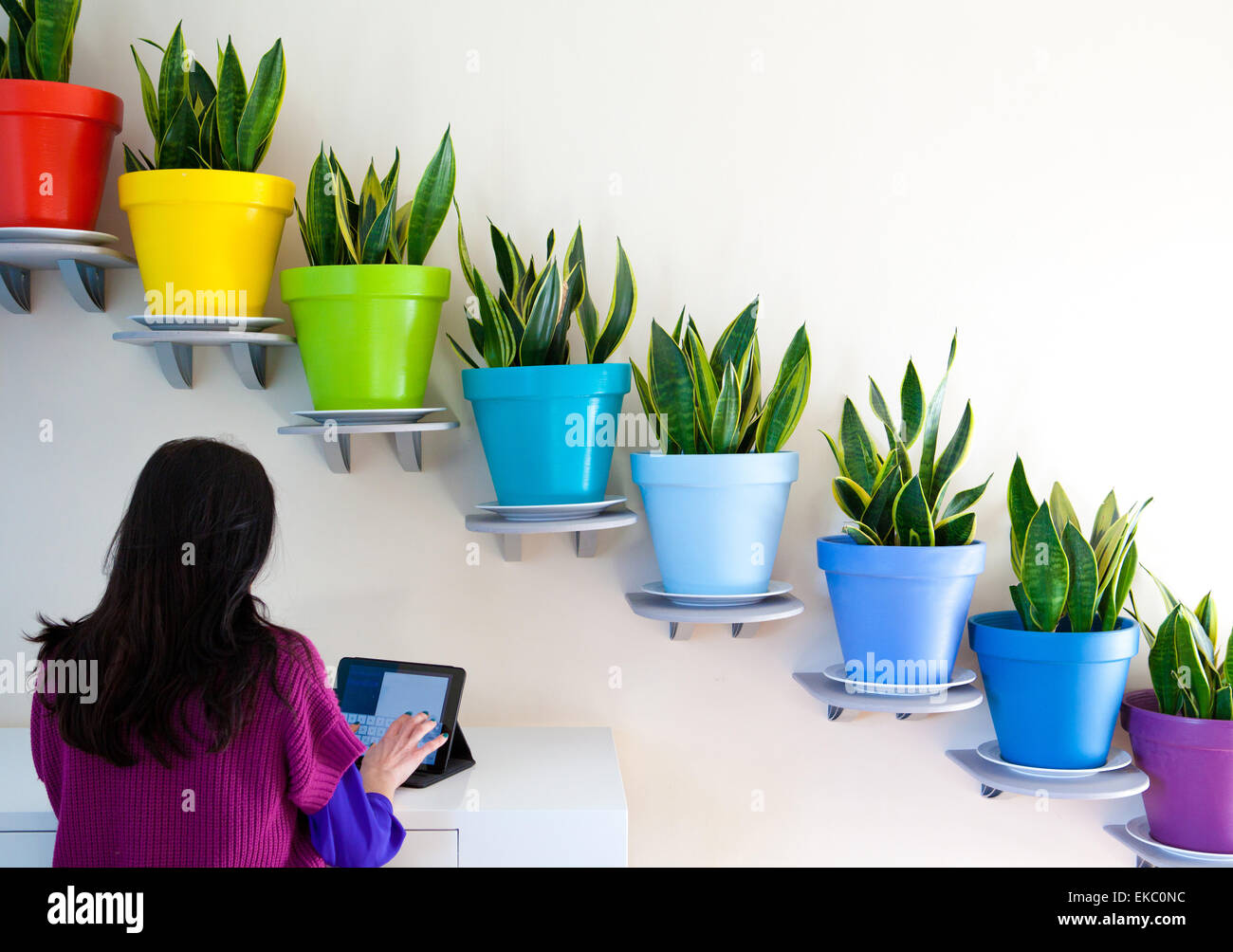 Rear view of woman using digital tablet in front of diagonal row of potted plants - Stock Image