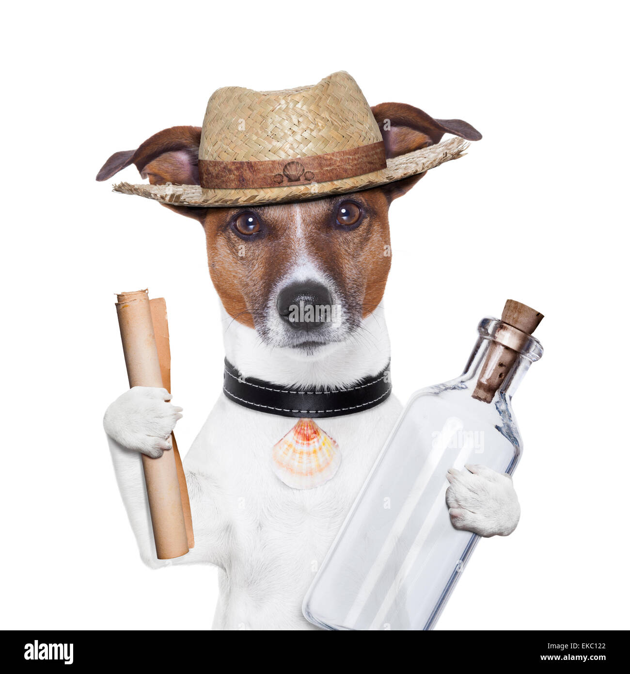 message in a bottle dog - Stock Image