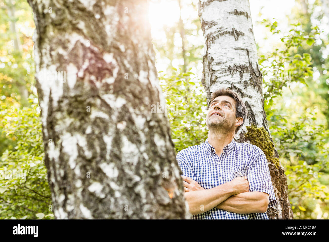 Mature man looking up at tree in garden - Stock Image