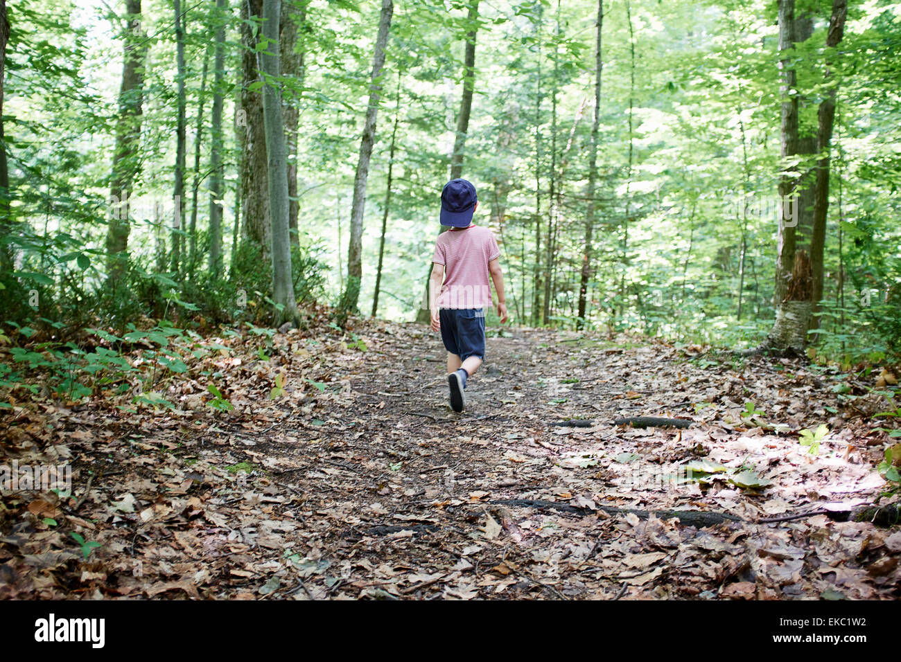 Rear view of boy strolling in forest, Hudson, Quebec, Canada - Stock Image