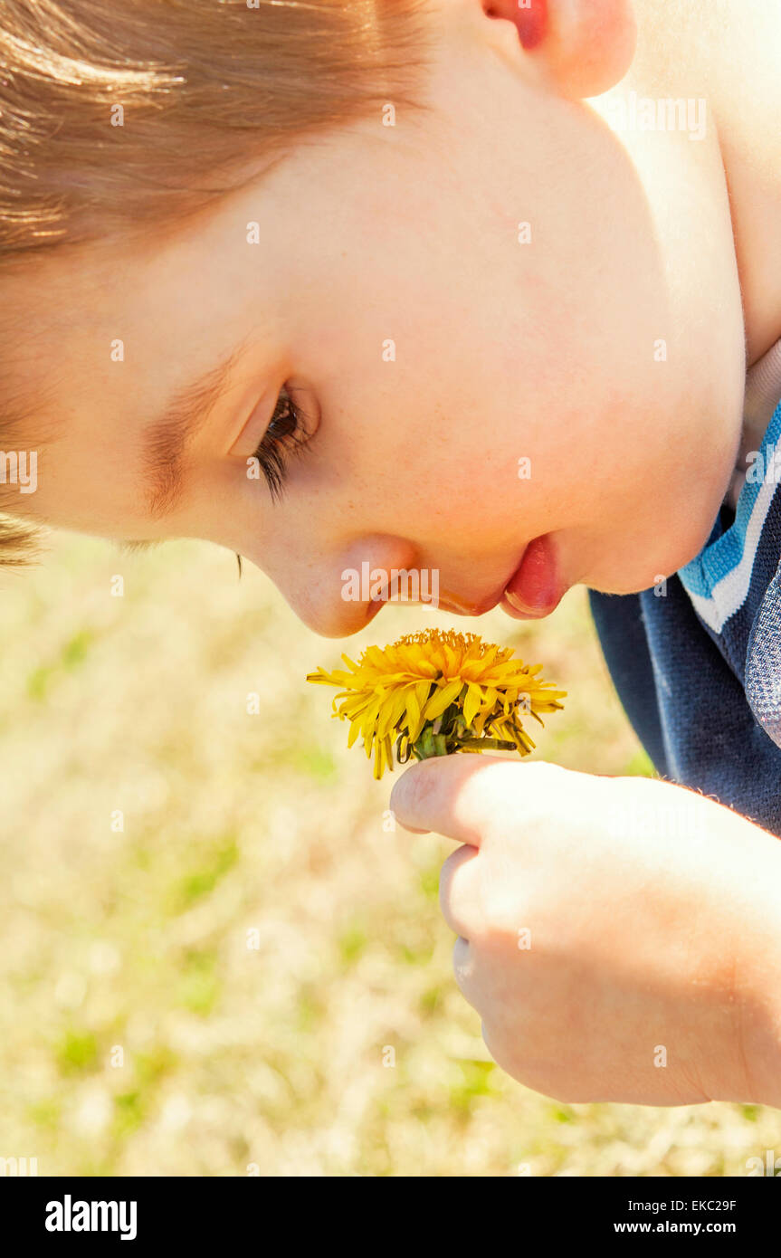 Child smelling dandelion - Stock Image