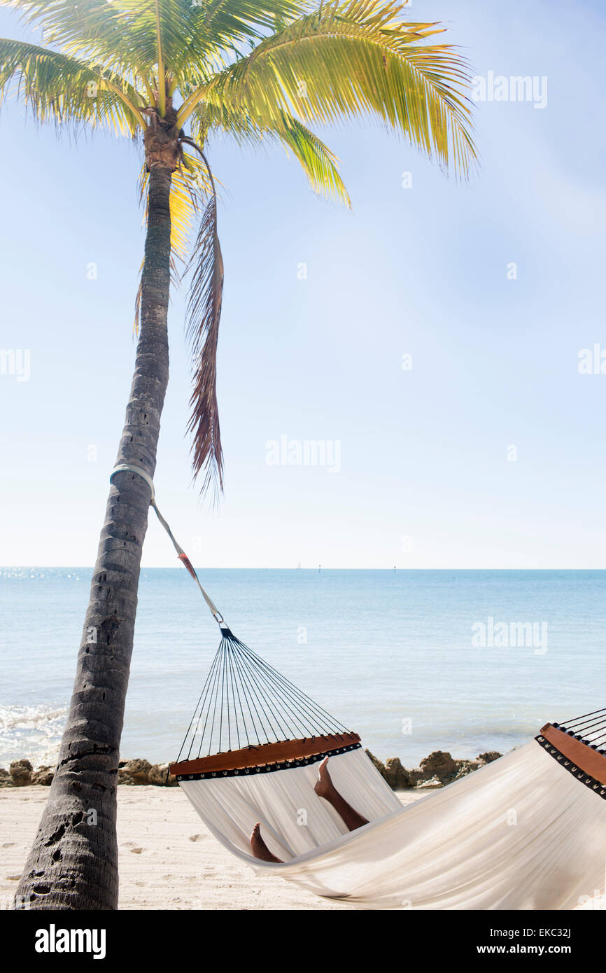 Hammock on sandy beach, Islamorada, Florida Keys, USA - Stock Image