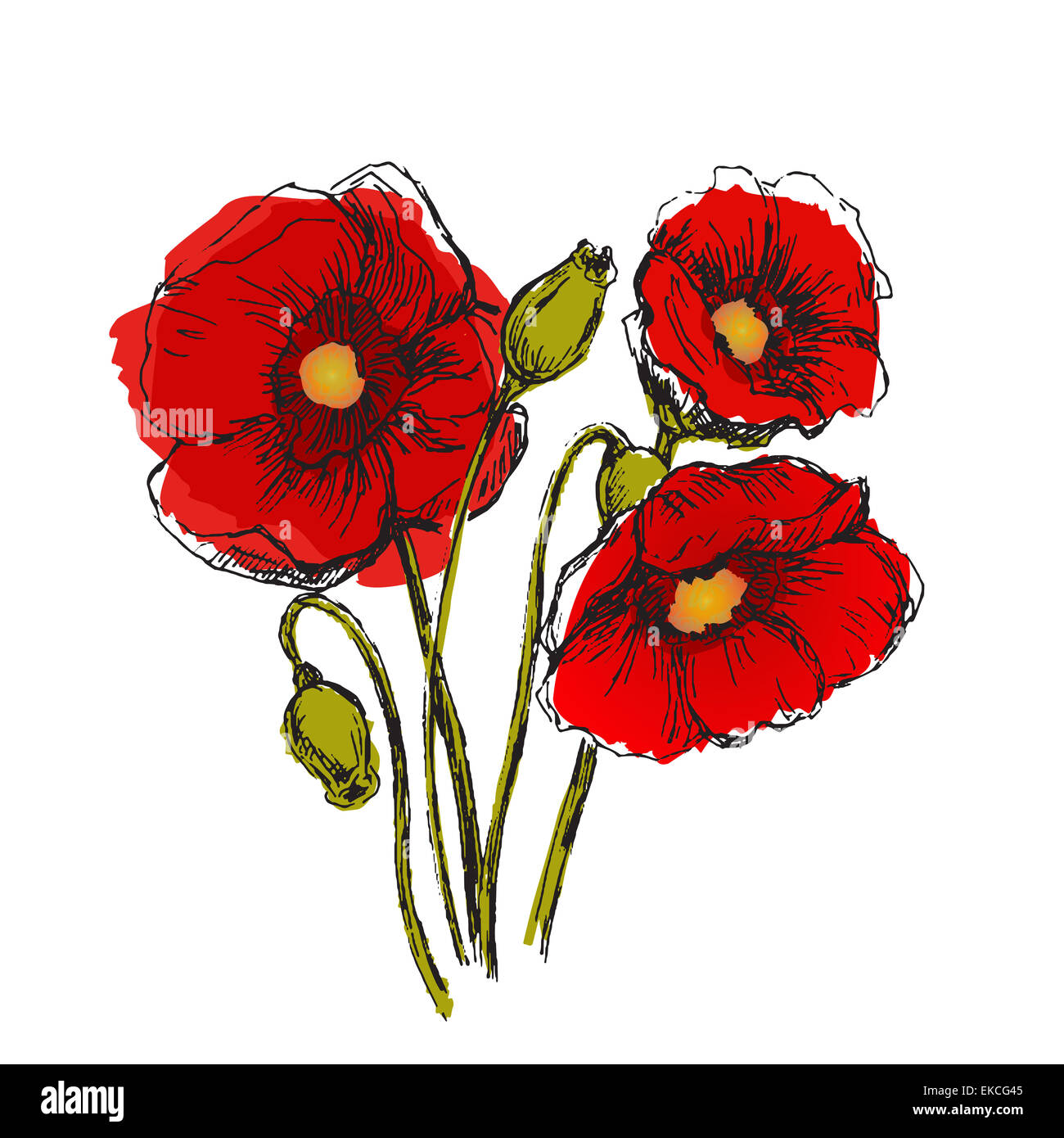 Flowers set color. Sketch converted to vectors. - Stock Image