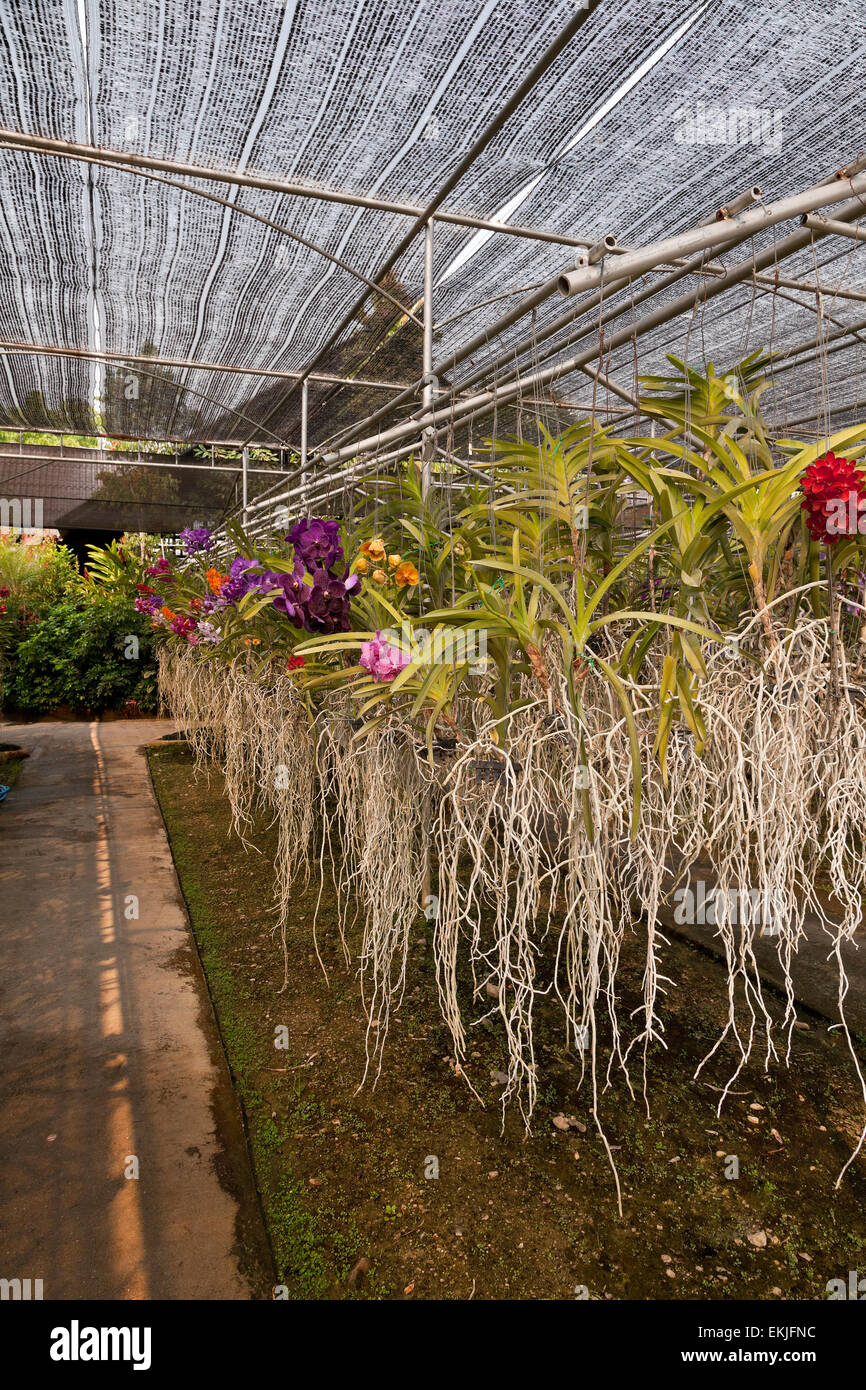 Orchid farm, Thailand, flowers growing in hanging pots in charcoal medium - Stock Image