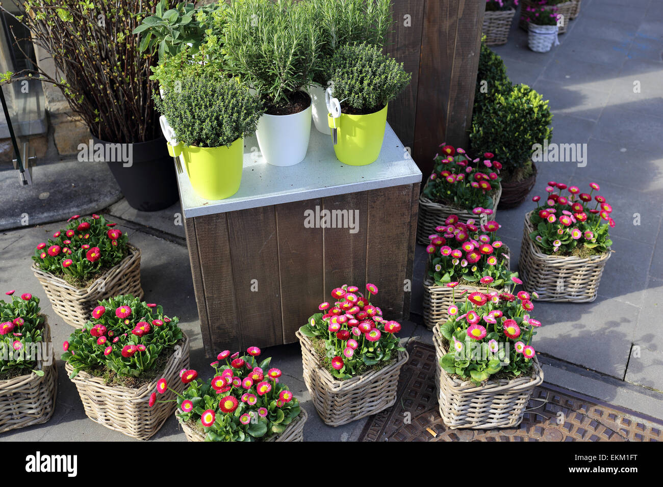 Flower stand - Stock Image