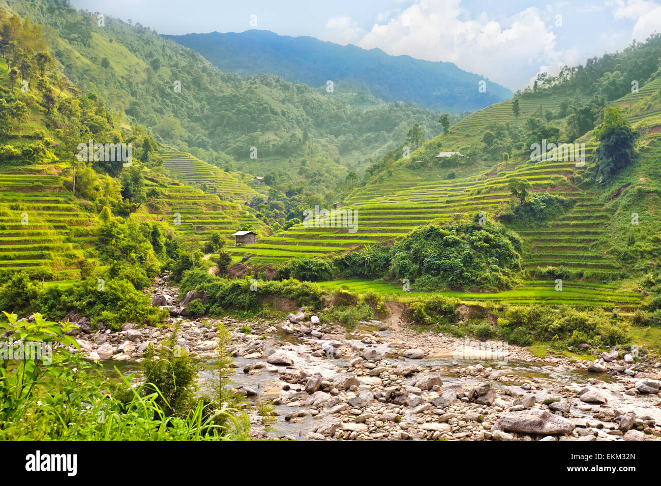 Green rice field terraces at nothern Vietnam - Stock Image