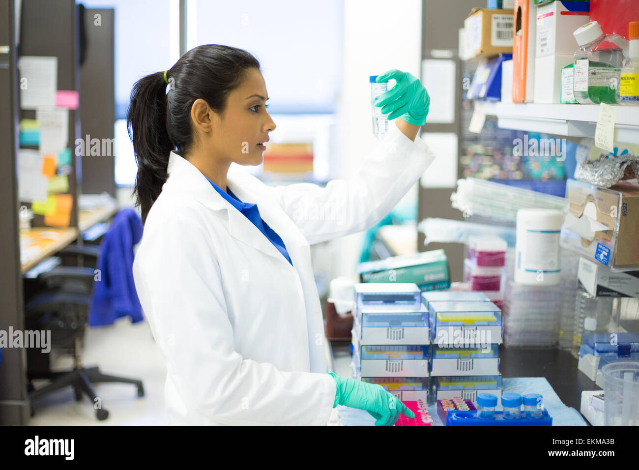 Closeup portrait, young scientist in white lab coat doing experiments in lab, academic sector. - Stock Image