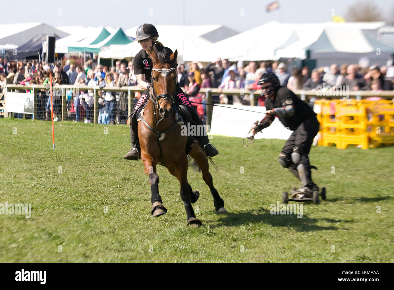 Horse boarding at a show in England - Stock Image