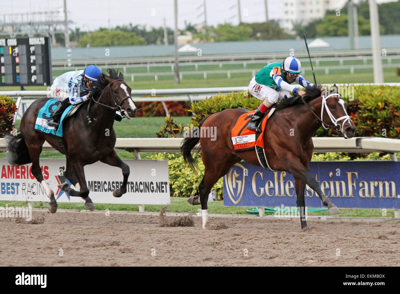 March 28, 2015 - Hallandale Beach, Florida, U.S. - March 28, 2015: #7 Materiality (KY) with jockey John Velazquez Stock Photo