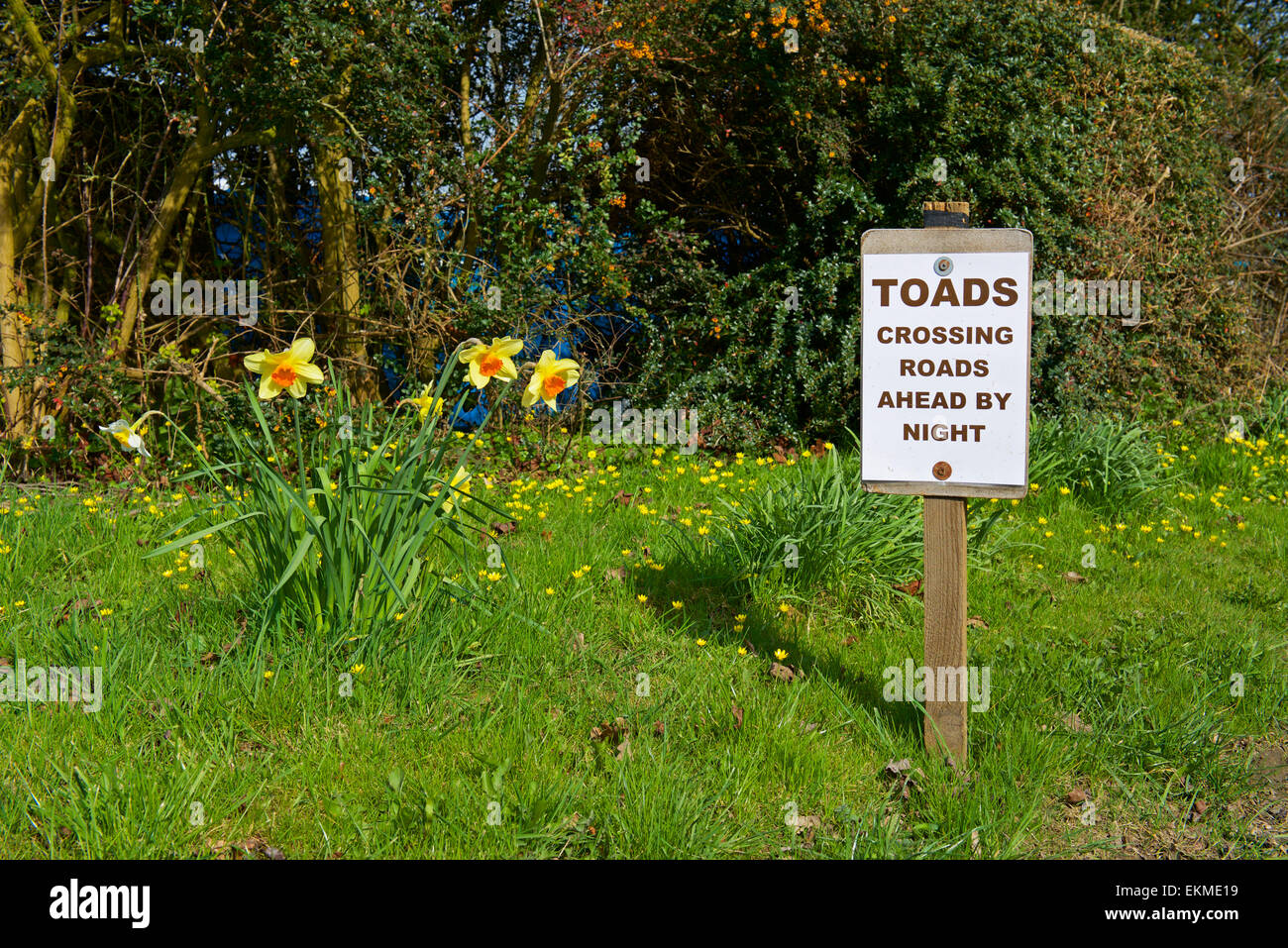 Sign: Toads crossing road ahead by night, England UK - Stock Image