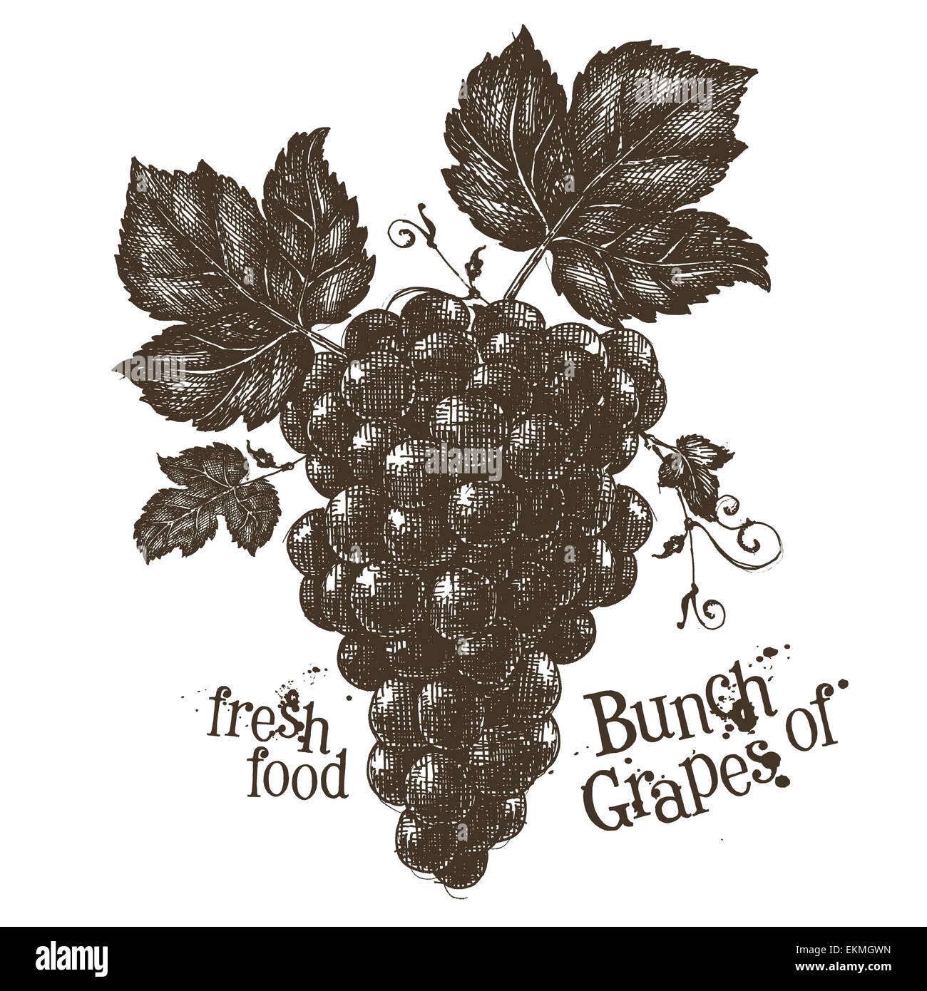 vine vector logo design template grapevine or fresh food icon stock