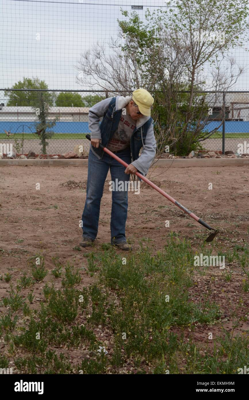 Senior Citizen hoeing weeds in the  yard. Albuquerque, New Mexico - USA - Stock Image